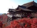 7D5N Tokyo + Disneyland / Hakone / Kyoto / Kobe / Osaka(Tour Code: JKY)