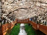 7 Days 6 Nights Busan & Gyeongju & Jeju Island Spring 2016 15 (English)