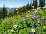 14 Day Advance Purchase Offer @ Pan Pacific Whistler Mountainside