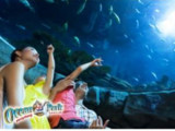 Enjoy 12% off admission to Ocean Park Hong Kong with Maybank Cards!