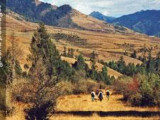 7 Days 6 Nights Paro & Thimphu & Punakha Escorted