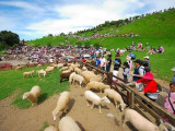 6 Days 5 Nights TAIWAN LEOFOO Theme Park / Cing Jing Farm / Tou Cheng Leisure Farm Ground Packages
