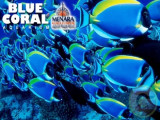 15% Off on Entrance Fee at Blue Coral Aquarium with Ambank