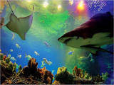 Enjoy 25% Off Admission Tickets to Aquaria KLCC with CIMB Bank